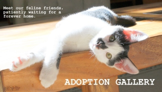 adoption gallery photo