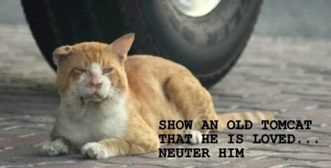neuter a tom